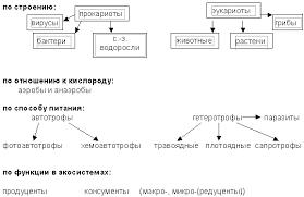 живых организмов  Многообразие живых организмов
