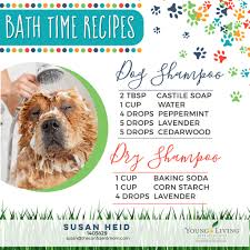 natural s for your dog s bath time diy wet and dry shampoo recipes with young