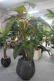 Gorgeous Indoor Plants For Bathroom Decorating Decor  LoversiqDecorative Plants For Home