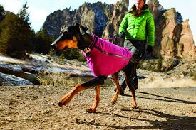 some people may scoff at the idea of putting clothes on dogs we used to be one of them but many dog owners have seen their dogs struggle with the