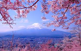 「桜の花の写真」の画像検索結果