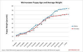 German Shorthaired Pointer Puppy Weight Chart Weimaraner Growth Chart Goldenacresdogs Com