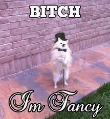 fancy-dog.jpg via Relatably.com