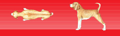 Purina Body Condition Score Chart Find Out Your Dogs Body Condition Score Purina