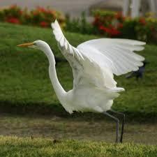 a white heron essay a white heron a white heron essays