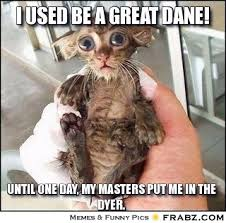 i used be a great dane!... - Pitiful Creature Meme Generator ... via Relatably.com
