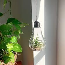 Terrarium Light Light Bulb Terrarium
