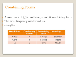 Forms For Word Chapter 100 Introduction to Medical Terminology Mrs Spearman ppt 65