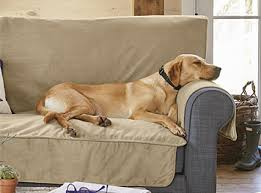 pets furniture. Grip-Tight™ Furniture Protector Pets M