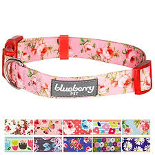 Blueberry Pet Collar Size Chart Details About Dog Cat Pet Neck Collar Ideal For Small Dogs Trendy Floral Print Comfort Fit