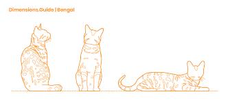 Bengal Cat Dimensions Drawings Dimensions Guide