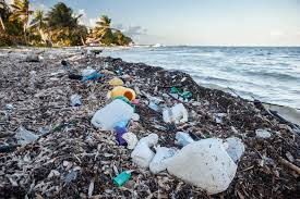 Image result for Plastics in the Ocean photos