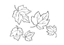 Small Picture Maple Leaf is the Autumn Leaves Colouring Page Colouring Pics