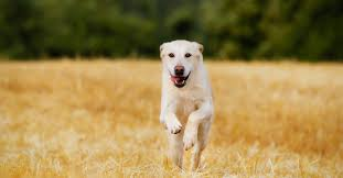 Image result for dog running away toward setting sun
