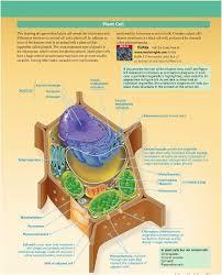 Protein terdiri dari bahan pembangun yang disebut asam amino. Struktur Sel Tumbuhan Klik Pada Gambar Untuk Menuju Posting Mengenai Perbedaan Sel Hewan Dan Sel Tumbuhan Sel Tumbuhan Sel Hewan Hewan
