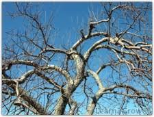 Spraying Dormant Oil On Fruit Trees GardeningDormant Fruit Trees