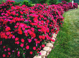 Small Picture Flower Bed Designs For Full Sun The Best Flowers Ideas Flower