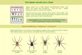 Free Spider Identification Chart 33 Exhaustive Brown Spider Identification Chart