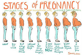 Afternoon Laugh Funny Stages Of Pregnancy Chart Chicago