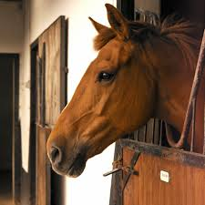 horse face side. Simple Horse Photo Credit Thinkstock With Horse Face Side R