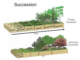 Primary And Secondary Succession Venn Diagram Primary And Secondary Succession Venn Diagram Under