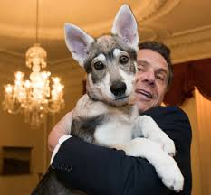 Jul 15, 2021 · the new york state executive mansion is located on eagle street in downtown albany. Captain Is New Top Dog At New York Governor S Mansion