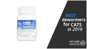 Drontal Feline Dosage Chart Best Dewormers For Cats Otc All Round Others 2019 Guide
