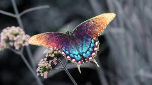 I choose this picture of a butterfly because i like the color.its natural  and beautiful and its not hand made.Its also rare if you want to find this  ...