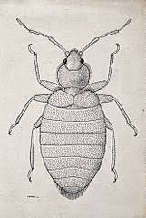 Six Types Of Bed Bugs In The United States Yes Pest Control