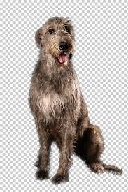 Irish Terrier Irish Wolfhound Scottish Deerhound Glen Pumi