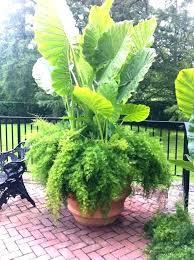 excellent large outdoor flower pots outdoor plant pots tall indoor large outdoor flower pots large outdoor