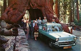 redwood16