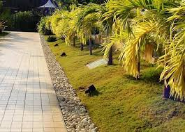 Small Picture Download Landscaping Designs In India javedchaudhry for home design