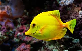 montessori zoology main characteristics of fish