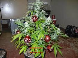 funny christmas pictures   Marijuana Christmas tree