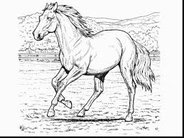 Realistic Horse Coloring Pages Color Bros