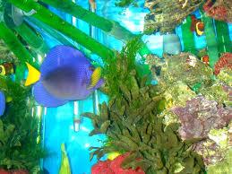 tropical aquarium wallpaper.  Aquarium Fish Images Tropical Wallpaper HD Wallpaper And Background Photos With Aquarium
