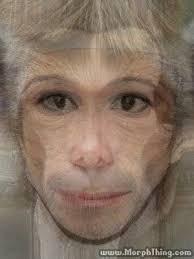 Monkey And - com Morphthing Jackson Barack Obama morphed Laden Michael Bin Osama