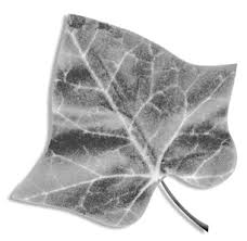 ivy leaf cover.p65