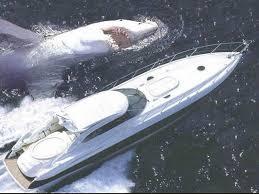 great white shark attacks boat. Modren Shark Great White Shark Attacks Luxury Cruiser Next Boats Wallpaper Inside Boat R
