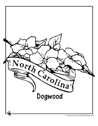 Small Picture North Carolina State Flower Coloring Page Woo Jr Kids Activities