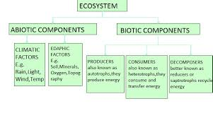 Components Of Ecosystem Flow Chart Evs Structure Of Ecosystem