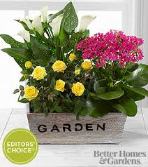 Small Picture The FTD Sunlit Simplicity Dishgarden by Better Homes and Gardens