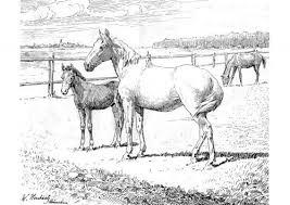 Free Printable Coloring Page With Realistic Horses Coloring Horses