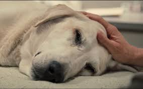 dogs are more than pets they bee part of the family this is why it s heartbreaking when we lose them especially if this loss is preventable