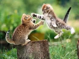 puppy and kitten fighting. Perfect Kitten 456 Throughout Puppy And Kitten Fighting