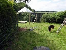 rats in the garden
