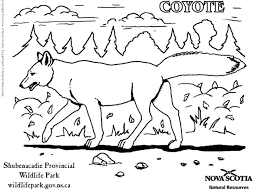 Small Picture Baby Coyote Coloring Pages Coloring Coloring Pages