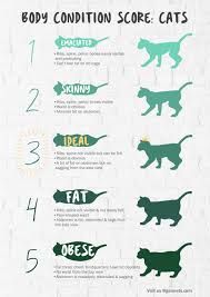 Overweight Cat Chart Gaia Veterinary Centre Is Your Cat Overweight