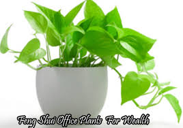 feng shui plant office. Feng Shui Office Plants For Wealth Plant